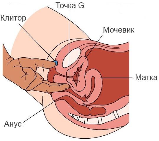Как довести женщину до оргазма при помощи точки джи фото фото 212-67